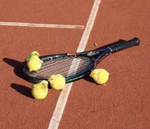 chickens-playing-tennis2